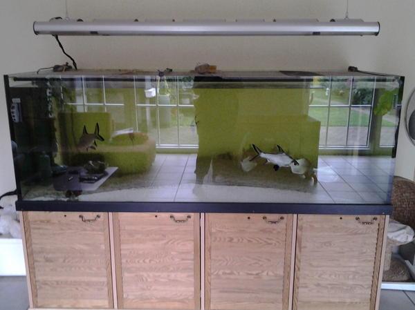 1000 liter aquarium in willich fische aquaristik kaufen und verkaufen ber private kleinanzeigen. Black Bedroom Furniture Sets. Home Design Ideas