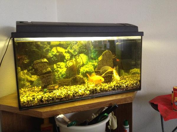 Suche aquarium neu und gebraucht kaufen bei for Suche zierfische