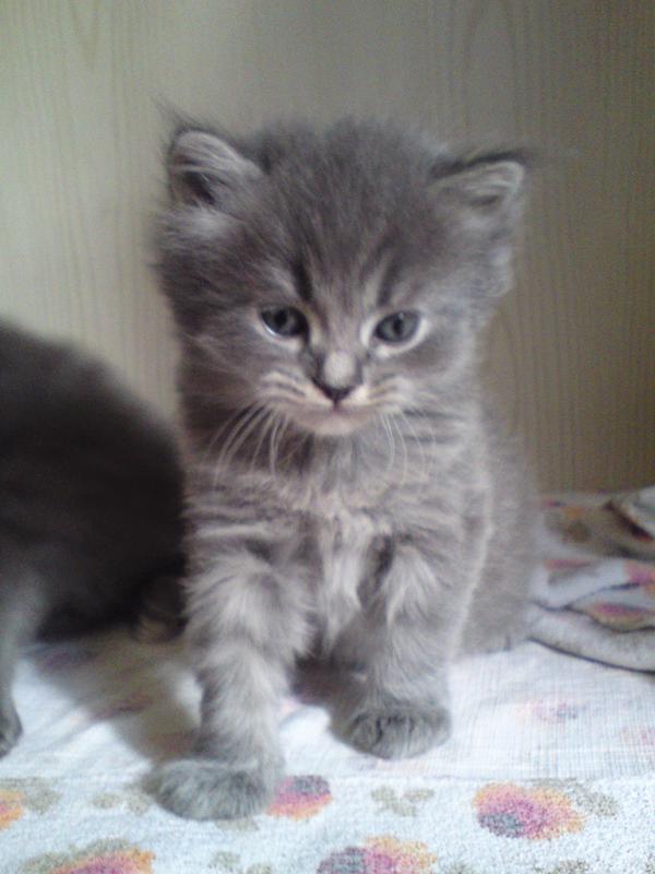 Gartenmobel Holz Oder Polyrattan : katzen zu verschenken picture kleinanzeigen katzen zu verschenken