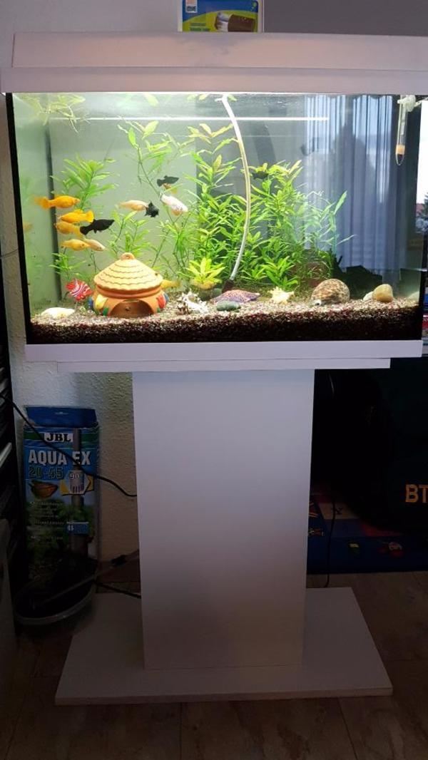 70 liter juwel aquarium mit unterschrank und zubeh r in. Black Bedroom Furniture Sets. Home Design Ideas