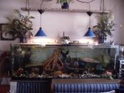 Aquarium 180x60x50