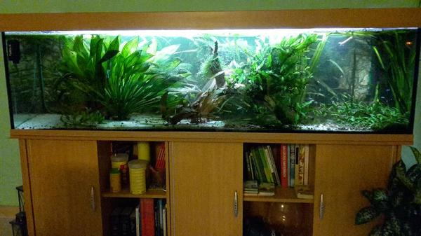 aquarium 200x50x50 mit schrank abdeckung inkl beleuchtung etc in sprendlingen fische. Black Bedroom Furniture Sets. Home Design Ideas