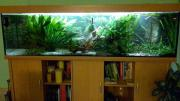Aquarium 200x50x50 mit