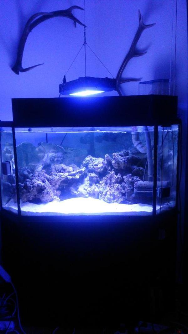 aquarium 380l in karlsruhe fische aquaristik kaufen und. Black Bedroom Furniture Sets. Home Design Ideas