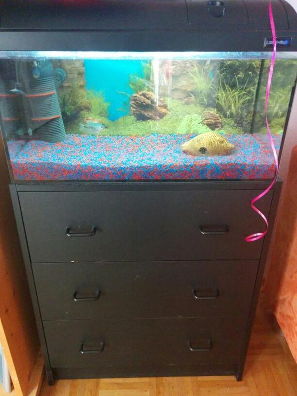 aquarium fische zubeh r in worms kaufen bei deine. Black Bedroom Furniture Sets. Home Design Ideas