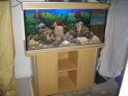 Aquarium Aqua One