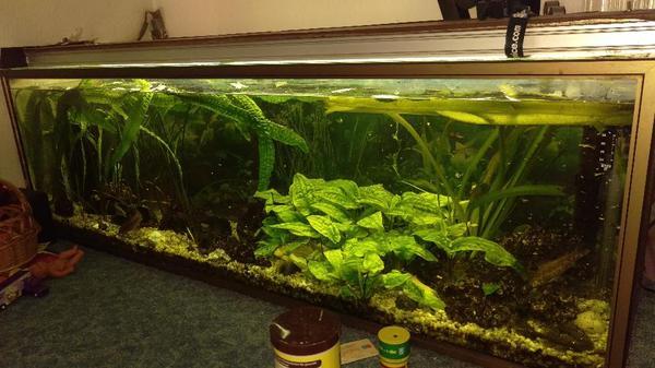 aquarium ca 400 liter komplett mit zubeh r fische und co2 anlage in wildau fische. Black Bedroom Furniture Sets. Home Design Ideas