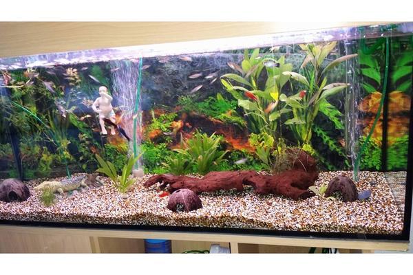 aquarium deko in berlin fische aquaristik kaufen und verkaufen ber private kleinanzeigen. Black Bedroom Furniture Sets. Home Design Ideas