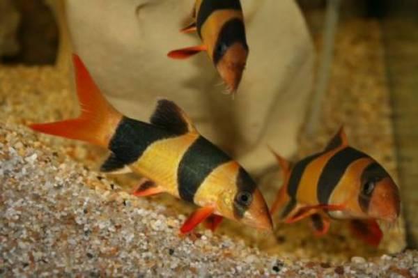 Aquarium fische pflanzen oder zubeh r in b ckeburg for Fische aquarium