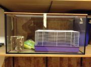 Aquarium für Mäuse