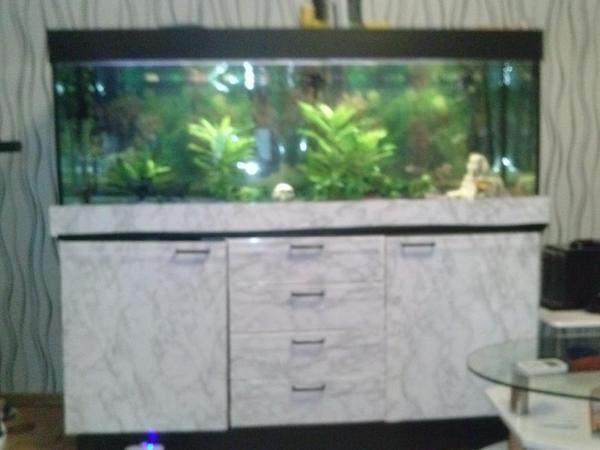 aquarium fische zubeh r in pforzheim kaufen bei deine. Black Bedroom Furniture Sets. Home Design Ideas
