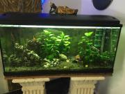 Aquarium komplett mit