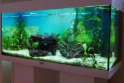 Aquarium mit viel