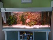 Aquariumkombination 240 Liter