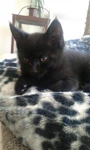 Baby Katze Schwarz