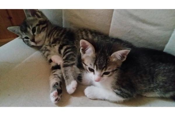 Babykatzen zu verschenken in Reilingen - Katzen kaufen und