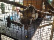 Baumstreifenhörnchen, jung, w,