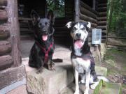 Berufstätige+ 2 Hunde