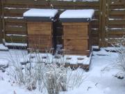 Bienen Bienenvolk Bienenvölker