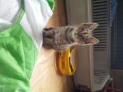 Blindes Katzchen Emma