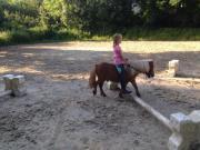 pferde kaufen und verkaufen
