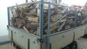 Brennholz Fichte Restbestand
