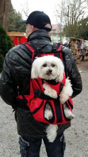 DogCarrier Hunderucksack Rucksack