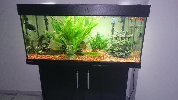 eheim 180 vivaline neuwertig in rheinfelden fische aquaristik kaufen und verkaufen ber. Black Bedroom Furniture Sets. Home Design Ideas