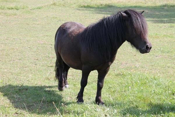 ern hrungsberatung f r pferde in zirndorf kaufen und verkaufen ber private kleinanzeigen. Black Bedroom Furniture Sets. Home Design Ideas