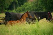 Fohlenaufzucht, Rentnerkoppel, Weideplätze