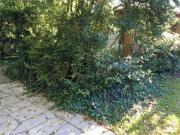Gartenarbeit/ Unkrautrupfer gesucht