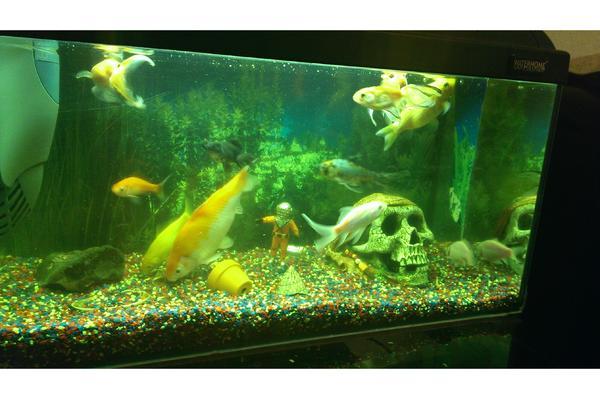Goldfische fische kleinanzeigen tiermarkt deine for Fische goldfische
