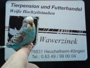 Große Vogelbörse in