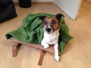 Grundstück für Hundeschule