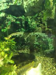 Haiwelse und Haibarben