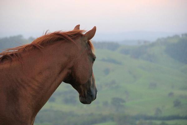Haus mit Pferdehaltung gesucht in Filderstadt