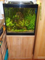 Hochwertiges aquarium komplettset 60x60x60 216 liter for Schrank 60x60x60