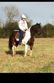 hübsches Irisches Pony ,