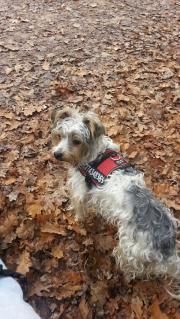 HundBetreuung DogSitter spazieren