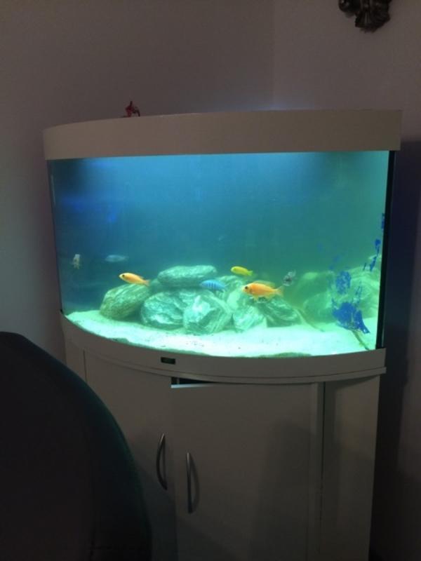 juwel 190 l weiss eckaquarium mit unterschrank fische zubeh r in philippsburg fische. Black Bedroom Furniture Sets. Home Design Ideas