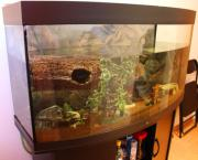 Juwel Aquarium mit