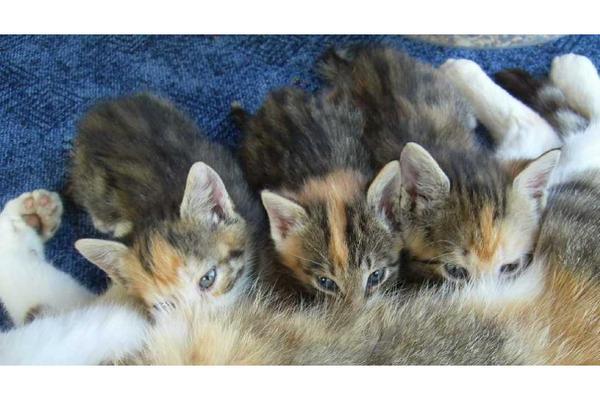 Gartenmobel Teak Aachen : Katze zu verschenken gesucht in Kaiserslautern  Katzen kaufen und