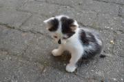 Katzenbaby als Zweitkatze