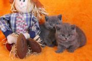 Katzenbaby + Zubehör