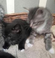 Katzenbabys suchen zu