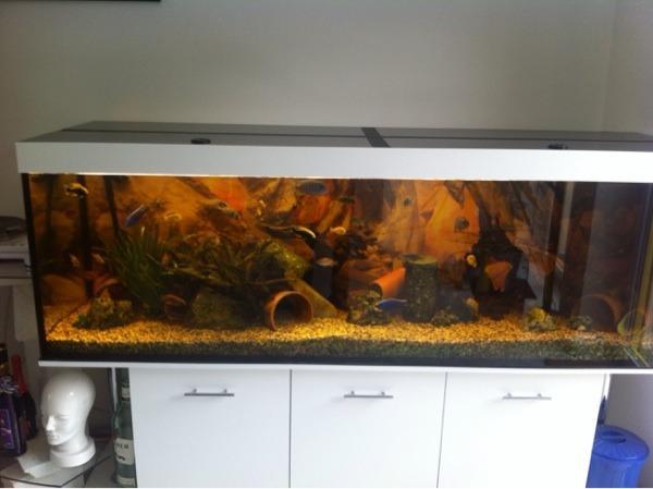 aquarium 2m neu und gebraucht kaufen bei. Black Bedroom Furniture Sets. Home Design Ideas