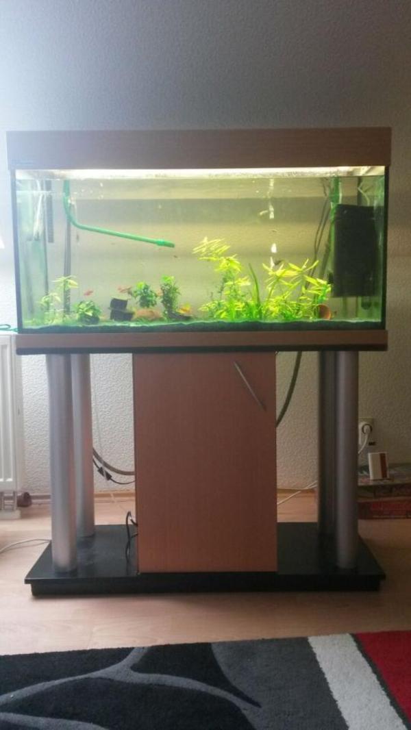 komplettaquarium mit unterschrank und beleuchtung in albersweiler fische aquaristik kaufen. Black Bedroom Furniture Sets. Home Design Ideas