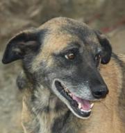 Leona, Tierschutzhund aus