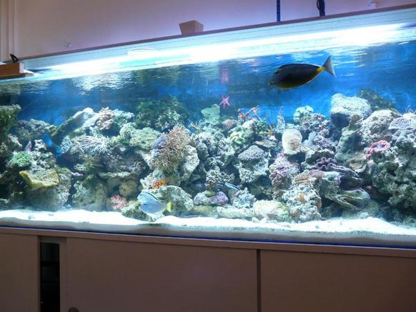 meerwasser aquarium 220x60x60cm in wuppertal fische. Black Bedroom Furniture Sets. Home Design Ideas