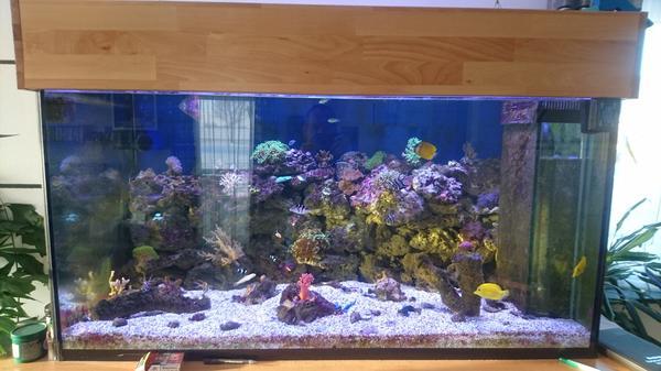 aquarium glasbecken  neu und gebraucht kaufen bei dhd24com